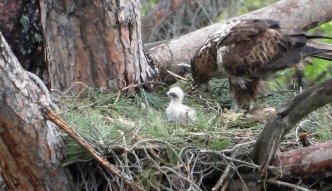 8 fostering nido alcala000