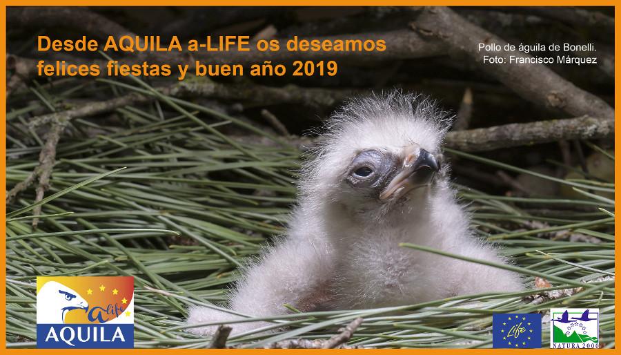 felicitacion AQUILA 2018